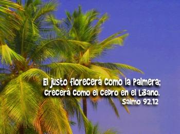 Resultado de imagen para Comentario exegético Salmo 92 (91